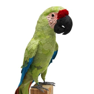 great_green_macaw8_sml